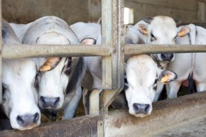 15 illegal slaughter houses, meat outlets shut in Ghaziabad