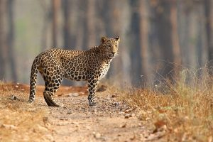Leopard shuts down Nepal's only international airport