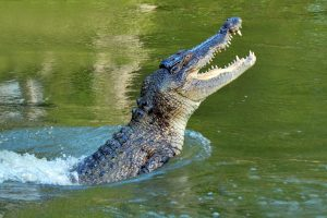 Brave boy saves uncle from crocodile attack
