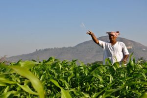 Relief for farmers, IFFCO keeps fertilisers' prices same