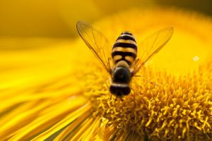 Bees may inspire drones, robots that can 'see' better