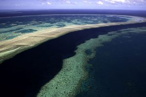 Power of attraction may help protect Great Barrier Reef