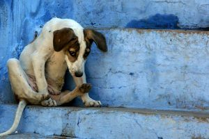 Social media angry after dog buried alive in Agra