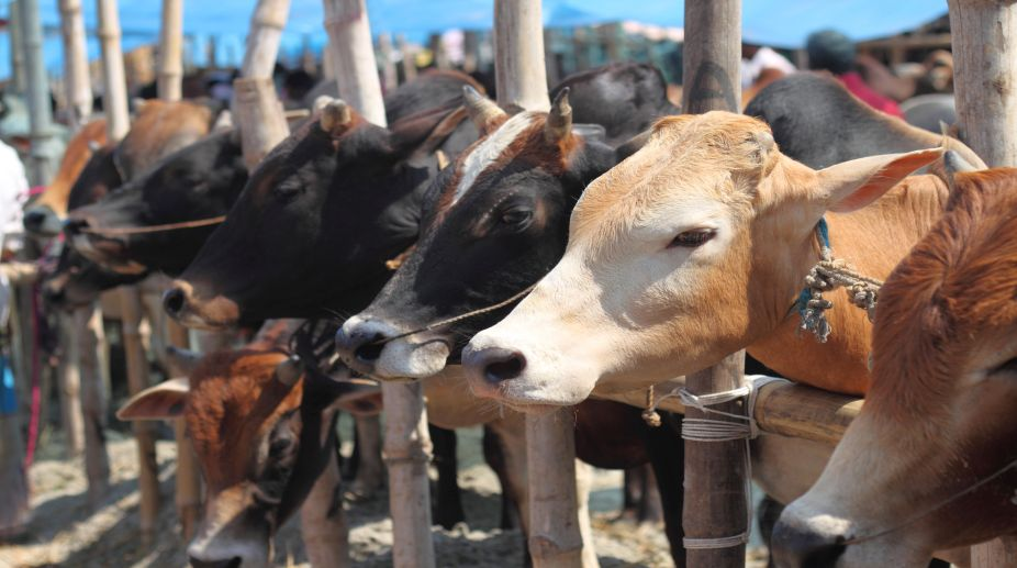 Why silence on mass cow deaths in MP, Congress asks PM, RSS chief