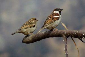 Requiem for the sparrow