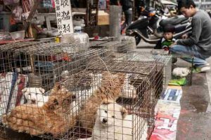 Taiwan bans consumption of dog, cat meat