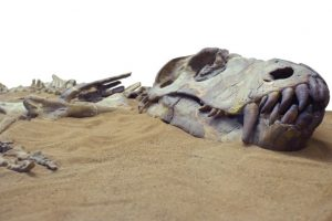 New species of sauropod dinosaur found in Tanzania