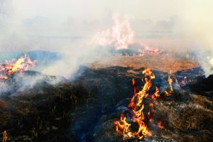 Come out with workable solution to stop crop burning: NGT