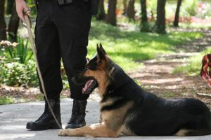 Delhi Police dog squad to get 100 new members