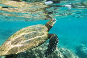 Central Govt approves turtle sanctuary in Allahabad