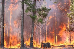Forest blaze in Baripada feared to be man-made