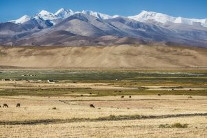 Warming climate threatens stability of Tibetan grasslands