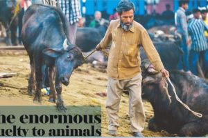 The enormous cruelty to animals