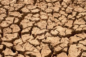 People suffer, cows die thirsty in parched land