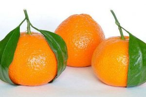'Made in India' Israeli oranges to hit market soon