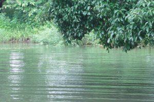 Urbanisation, pollution affecting freshwater bodies