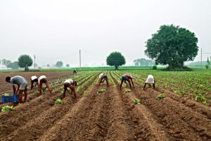 UP, 6 other states slow in issuing soil health cards: Singh