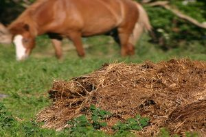 Haryana scheme for sale of organic manure, cow urine