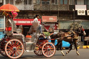 Government wants Victoria carriage owners to become hawkers