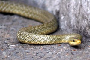 Ancient snakes both like eels, burrowed like worms