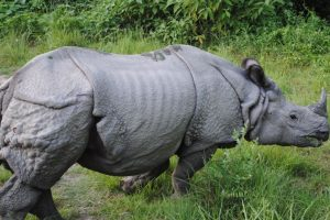Assam to raise new force for rhino protection