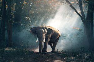Most captive elephants kept in cruel conditions