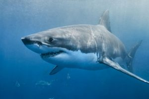 Two people attacked by sharks in Australia