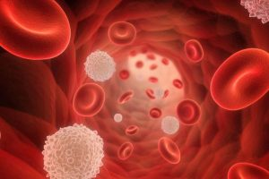 Protein target to help fight malaria identified