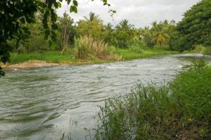 Canal breach floods cultivated land in Mathura