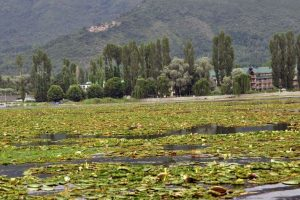 J-K Governor worried over declining beauty of Dal Lake