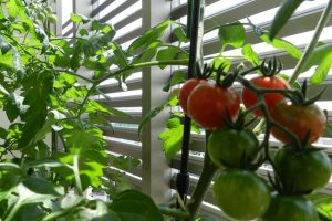 Let your kitchen garden heal you