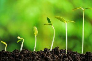 NDMC to plant 10 lakh saplings during monsoon season