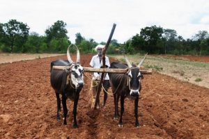 BJP MP flays Maha govt over loan waiver scheme for farmers