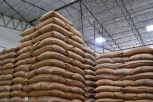 FCI let over 4 lakh tonne wheat rot away: CAG