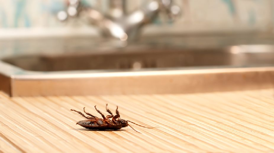 How to get rid of cockroach?