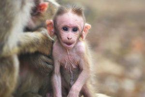 Meet Alesi, our 13-million-year-old ancestor