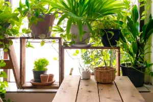 Fight air pollution with green indoor plants