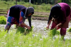 '30 pc agriculture budget to be spent on women farmers'