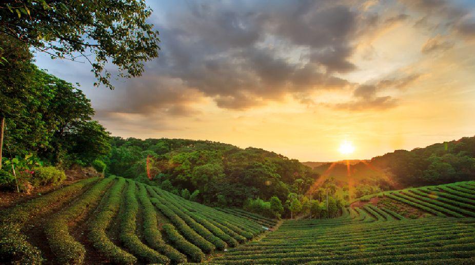 Tea exports, Indian Tea export, Tea Board India, Tea exports FY18