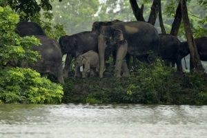 Assam floods: 225 animals dead in Kaziranga