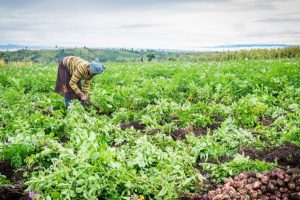 '30% agriculture budget to be spent on women farmers'