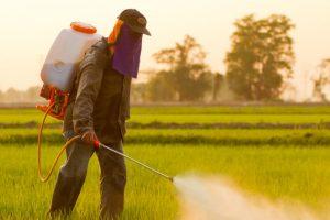Pesticide-contaminated eggs detected in S Korea