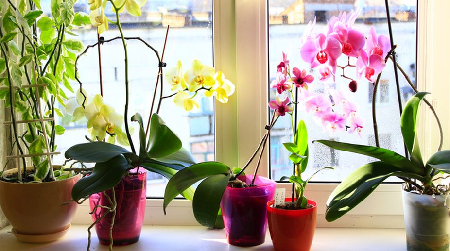 Gardening tips: How to grow orchids indoors