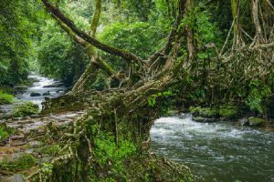 Mawlynnong: Spotless roads and root bridges
