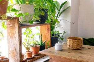 Use indoor plants for cleaner, beautiful homes