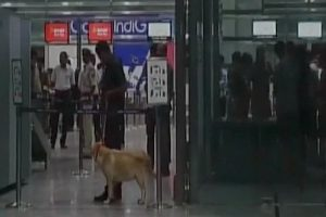 Scare over 'explosive' in passenger's baggage at Mangaluru airport