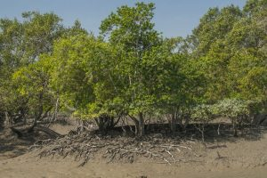 Experts stress on conservation of biodiversity in Sundarbans