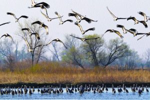 Urgent need to preserve wetlands