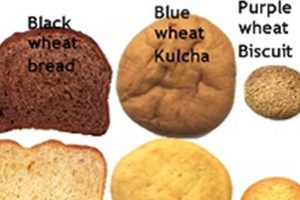 Coloured wheat with health benefits like blueberries