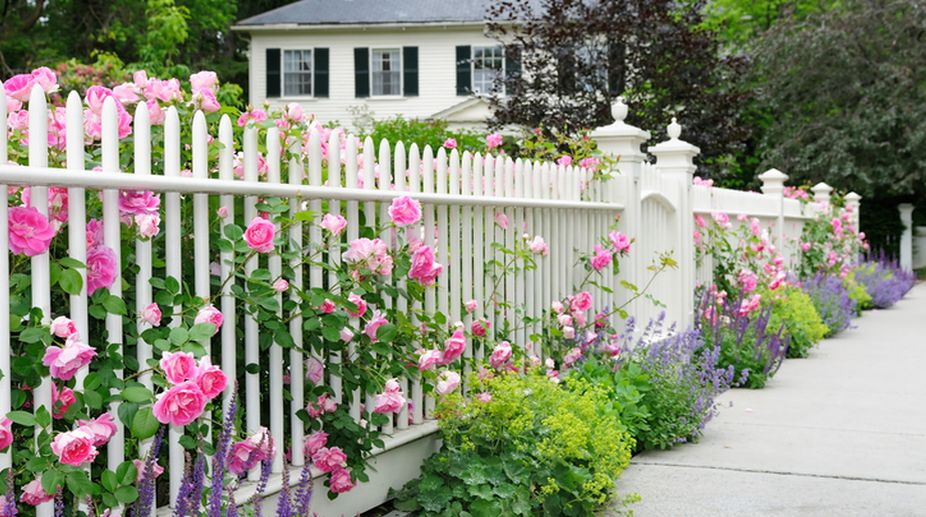 How to make your garden flowers bloom long and healthy